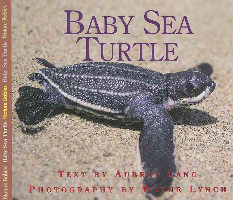 Baby Sea Turtle By Lang, Aubrey/ Lynch, Wayne (PHT)